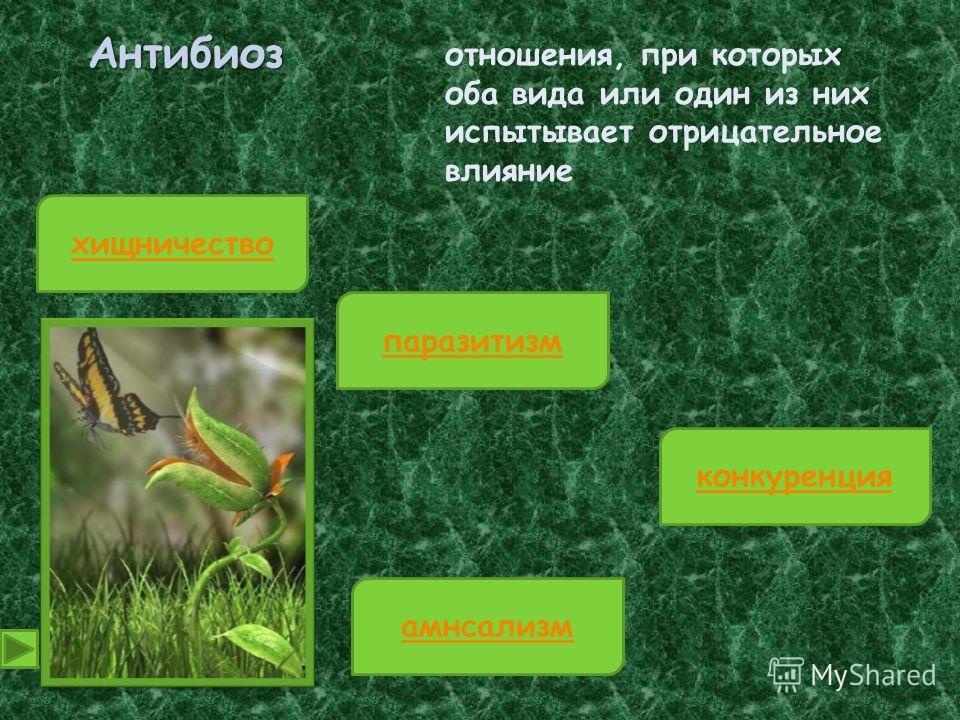 Антибиоз отношения, при которых оба вида или один из них испытывает отрицательное влияние хищничество конкуренция паразитизм амнсализм