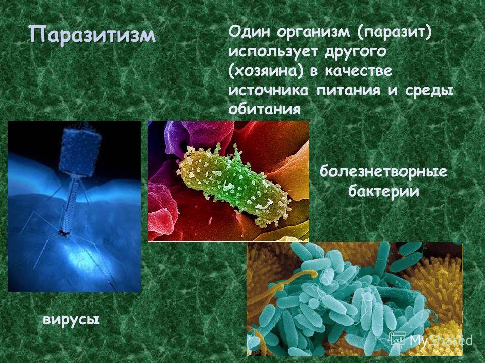 Паразитизм Один организм (паразит) использует другого (хозяина) в качестве источника питания и среды обитания вирусы болезнетворные бактерии