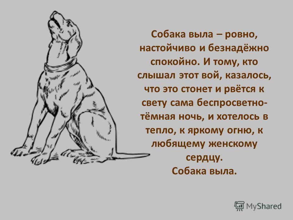 Днем воют собаки к чему