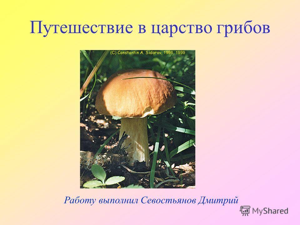 Работу выполнил Севостьянов Дмитрий Путешествие в царство грибов
