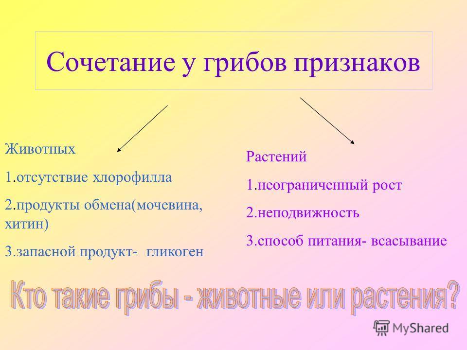 Сочетание у грибов признаков Животных 1.отсутствие хлорофилла 2.продукты обмена(мочевина, хитин) 3.запасной продукт- гликоген Растений 1.неограниченный рост 2.неподвижность 3.способ питания- всасывание
