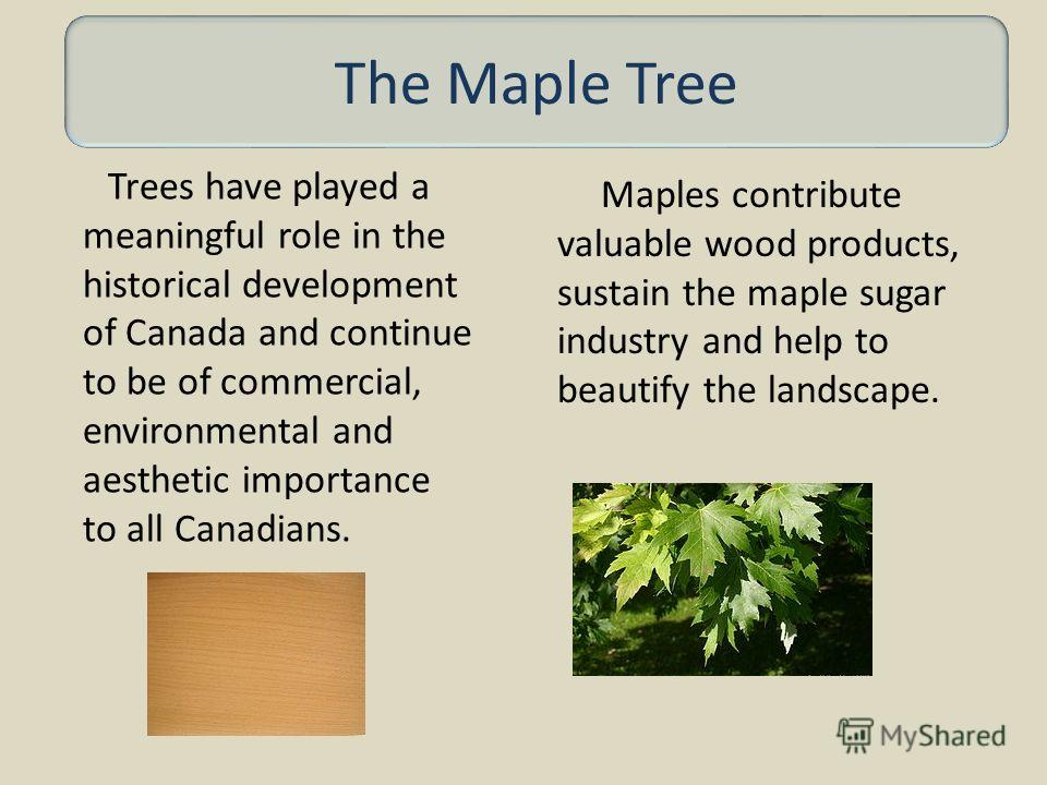 Trees have played a meaningful role in the historical development of Canada and continue to be of commercial, environmental and aesthetic importance to all Canadians. Maples contribute valuable wood products, sustain the maple sugar industry and help