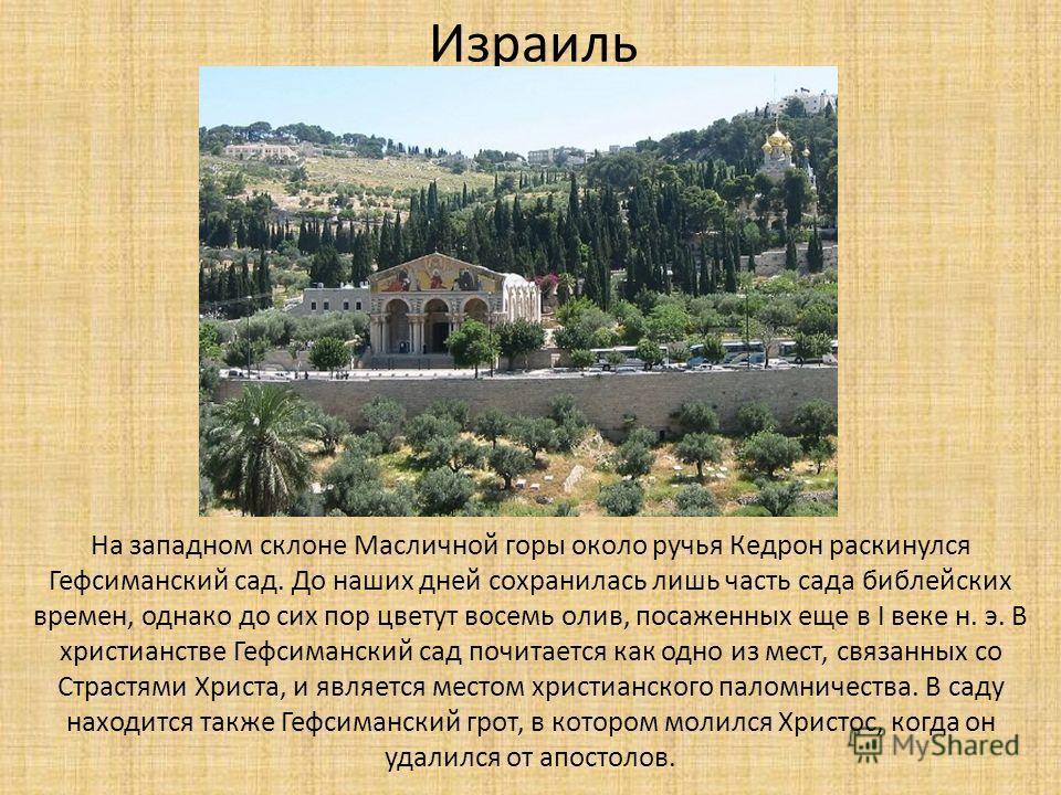 Израиль На западном склоне Масличной горы около ручья Кедрон раскинулся Гефсиманский сад. До наших дней сохранилась лишь часть сада библейских времен, однако до сих пор цветут восемь олив, посаженных еще в I веке н. э. В христианстве Гефсиманский сад