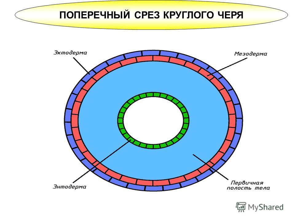 комплекс либерта от паразитов