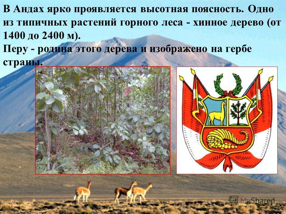 В Андах ярко проявляется высотная поясность. Одно из типичных растений горного леса - хинное дерево (от 1400 до 2400 м). Перу - родина этого дерева и изображено на гербе страны.
