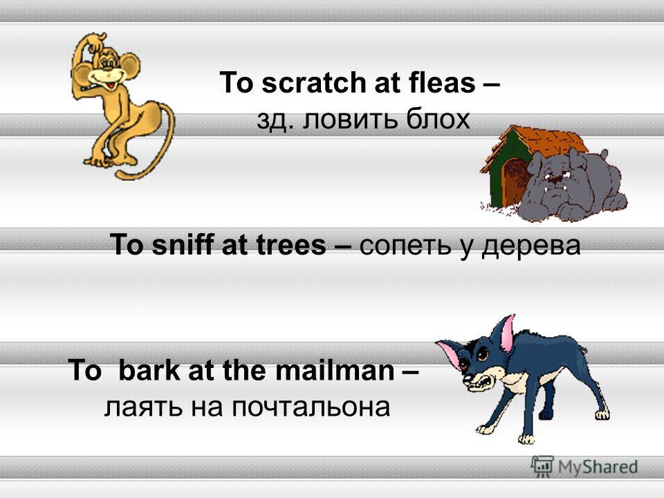 To scratch at fleas – зд. ловить блох To sniff at trees – сопеть у дерева To bark at the mailman – лаять на почтальона