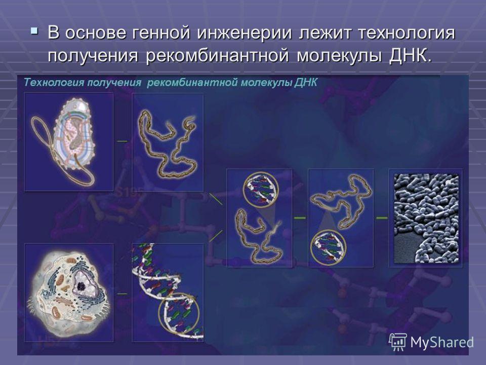 В основе генной инженерии лежит технология получения рекомбинантной молекулы ДНК. В основе генной инженерии лежит технология получения рекомбинантной молекулы ДНК.