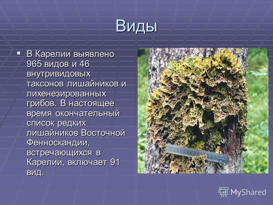 В Карелии выявлено 965 видов и 46 внутривидовых таксонов лишайников и лихенезированных грибов. В настоящее время окончательный список редких лишайников Восточной Фенноскандии, встречающихся в Карелии, включает 91 вид. В Карелии выявлено 965 видов и 4