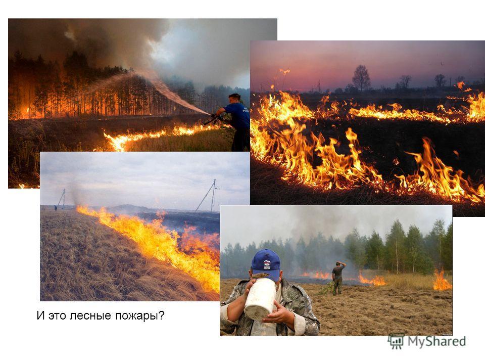 И это лесные пожары?