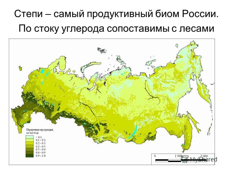 Степи – самый продуктивный биом России. По стоку углерода сопоставимы с лесами