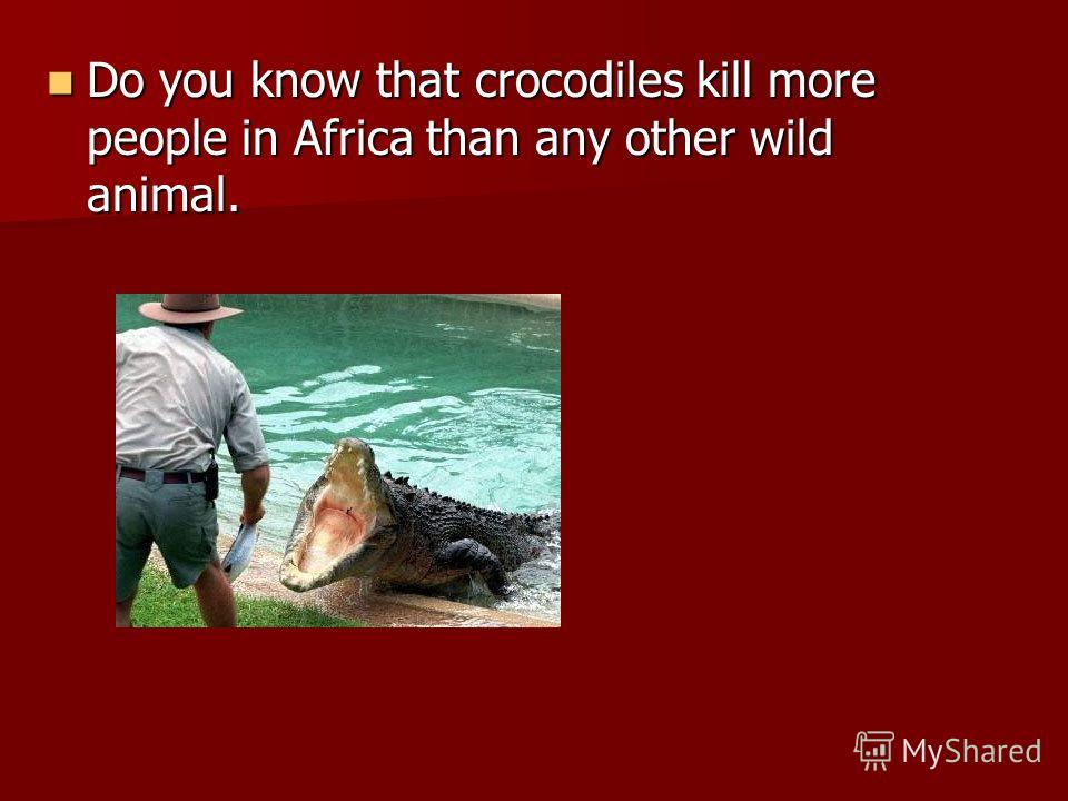 Do you know that crocodiles kill more people in Africa than any other wild animal.