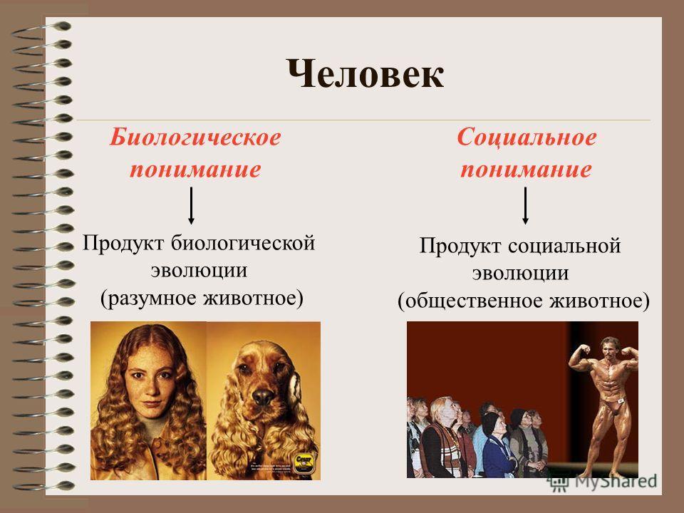 Человек Биологическое понимание Социальное понимание Продукт биологической эволюции (разумное животное) Продукт социальной эволюции (общественное животное)