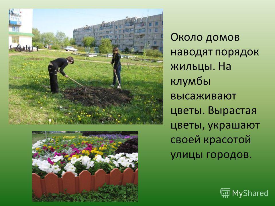 Около домов наводят порядок жильцы. На клумбы высаживают цветы. Вырастая цветы, украшают своей красотой улицы городов.