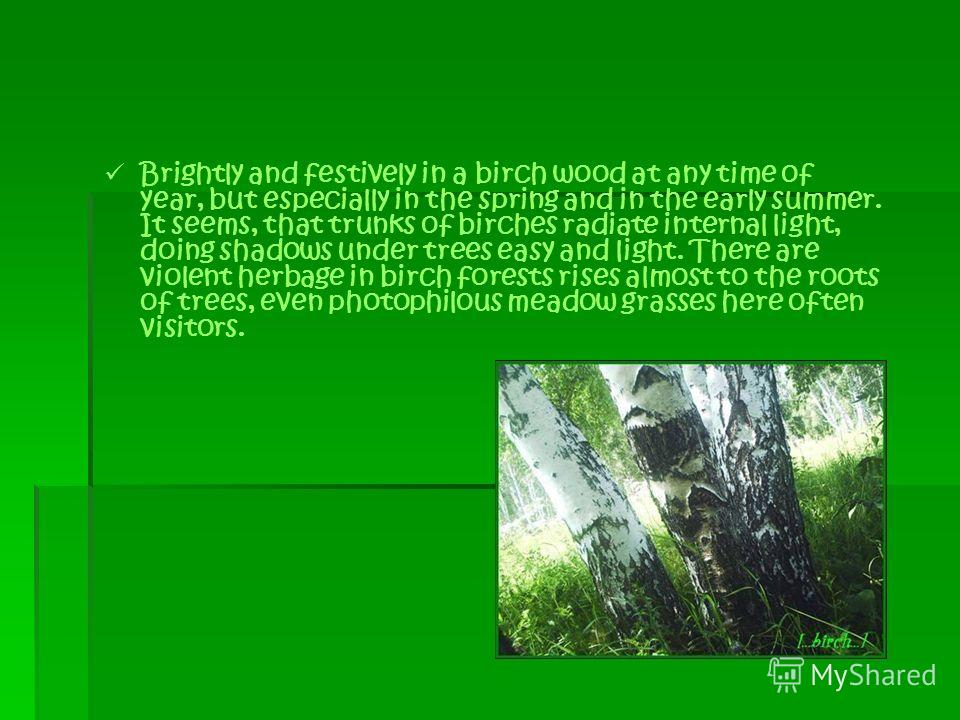 Brightly and festively in a birch wood at any time of year, but especially in the spring and in the early summer. It seems, that trunks of birches radiate internal light, doing shadows under trees easy and light. There are violent herbage in birch fo