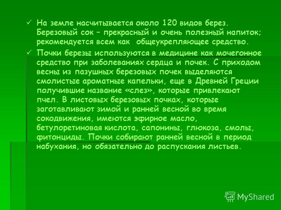 На земле насчитывается около 120 видов берез. Березовый сок – прекрасный и очень полезный напиток; рекомендуется всем как общеукрепляющее средство. Почки березы используются в медицине как мочегонное средство при заболеваниях сердца и почек. С приход