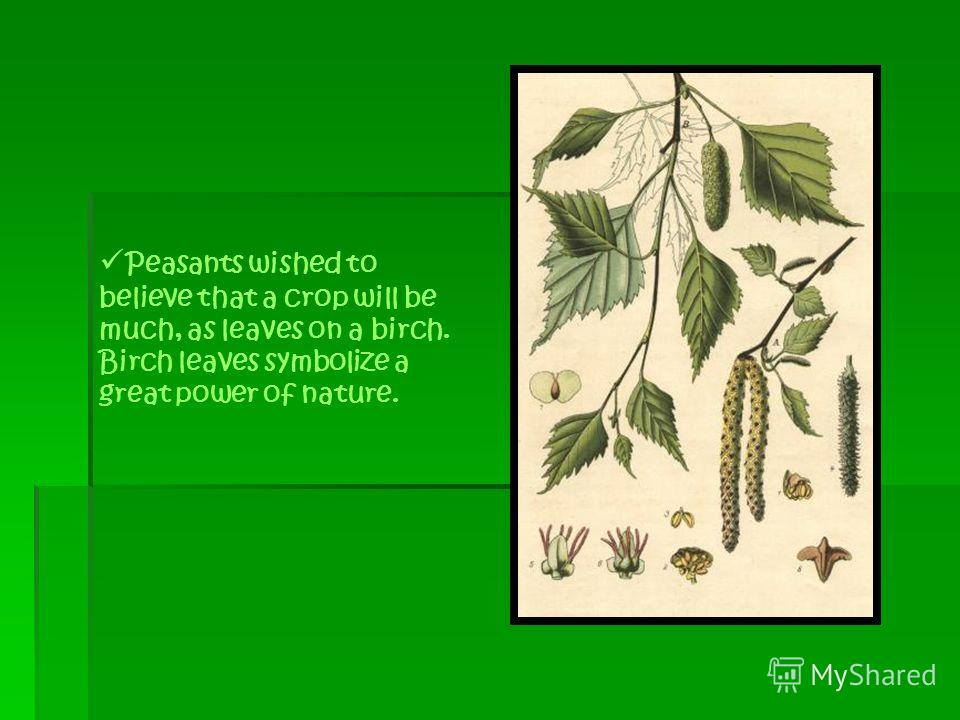 Peasants wished to believe that a crop will be much, as leaves on a birch. Birch leaves symbolize a great power of nature.