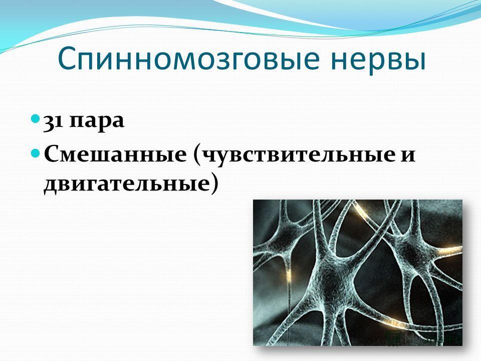Спинномозговые нервы 31 пара Смешанные (чувствительные и двигательные)