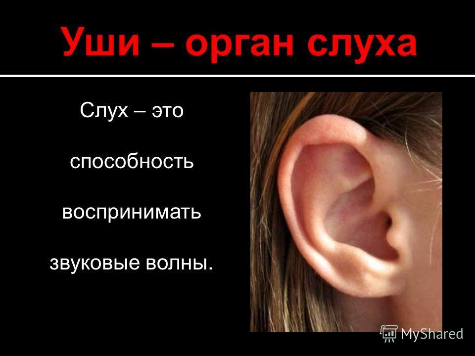 Слух – это способность воспринимать звуковые волны.