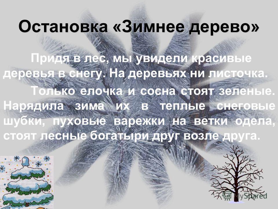 Остановка «Зимнее дерево» Придя в лес, мы увидели красивые деревья в снегу. На деревьях ни листочка. Только елочка и сосна стоят зеленые. Нарядила зима их в теплые снеговые шубки, пуховые варежки на ветки одела, стоят лесные богатыри друг возле друга