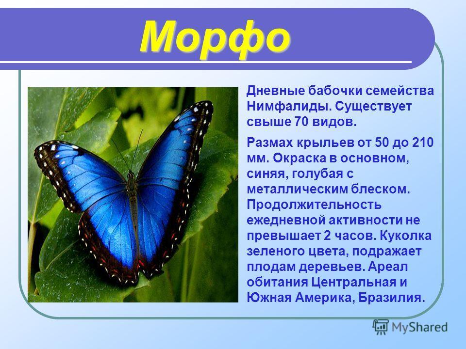 Морфо Дневные бабочки семейства Нимфалиды. Существует свыше 70 видов. Размах крыльев от 50 до 210 мм. Окраска в основном, синяя, голубая с металлическим блеском. Продолжительность ежедневной активности не превышает 2 часов. Куколка зеленого цвета, по