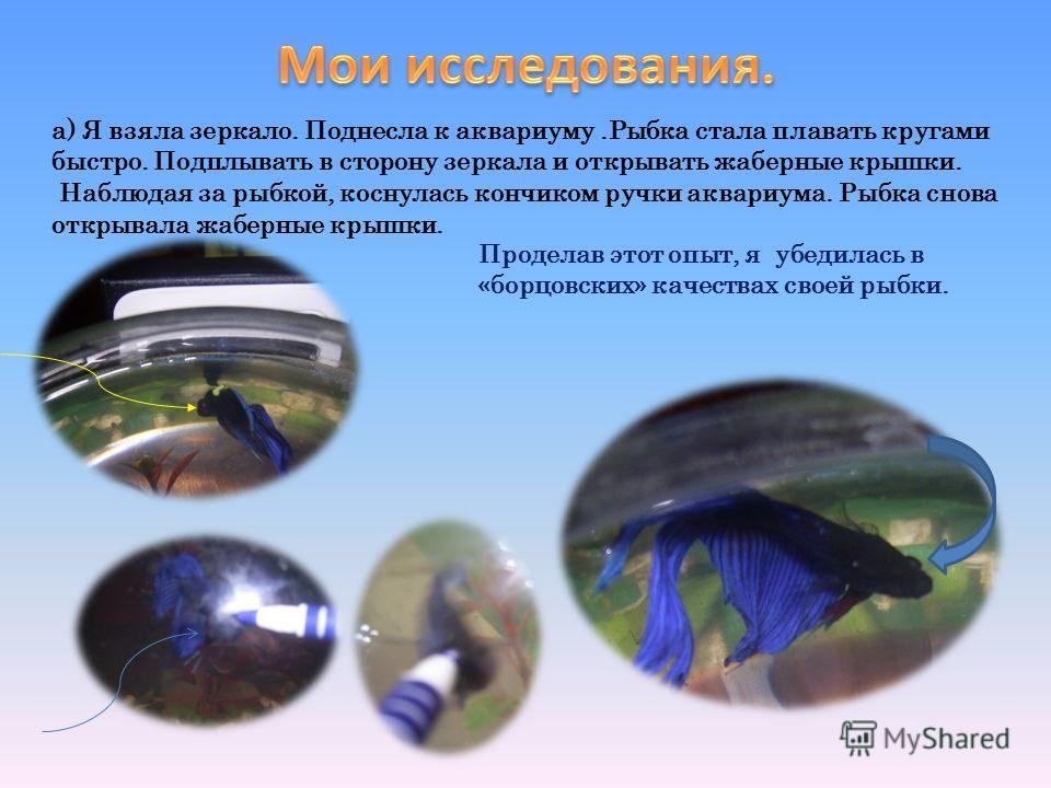 а) Я взяла зеркало. Поднесла к аквариуму.Рыбка стала плавать кругами быстро. Подплывать в сторону зеркала и открывать жаберные крышки. Наблюдая за рыбкой, коснулась кончиком ручки аквариума. Рыбка снова открывала жаберные крышки. Проделав этот опыт,