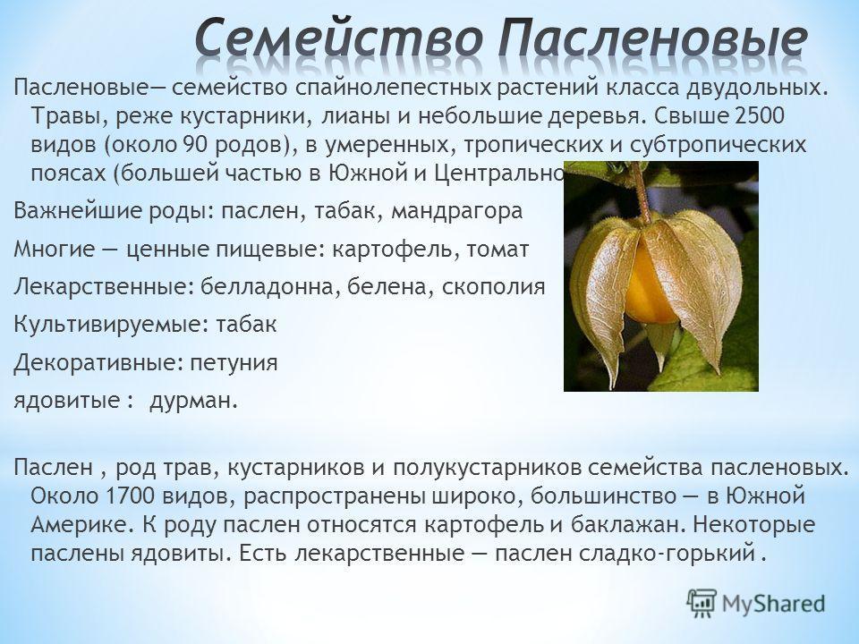 Пасленовые семейство спайнолепестных растений класса двудольных. Травы, реже кустарники, лианы и небольшие деревья. Свыше 2500 видов (около 90 родов), в умеренных, тропических и субтропических поясах (большей частью в Южной и Центральной Америке). Ва