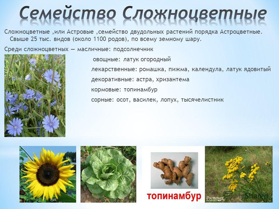 Сложноцветные,или Астровые,семейство двудольных растений порядка Астроцветные. Свыше 25 тыс. видов (около 1100 родов), по всему земному шару. Среди сложноцветных масличные: подсолнечник овощные: латук огородный лекарственные: ромашка, пижма, календул