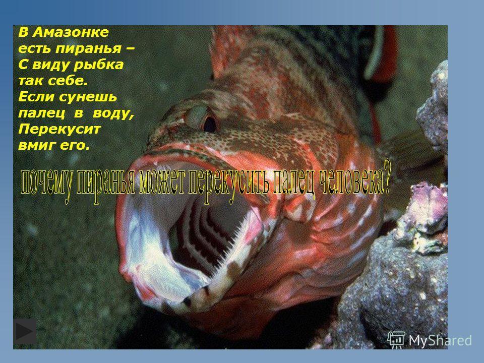 В Амазонке есть пиранья – С виду рыбка так себе. Если сунешь палец в воду, Перекусит вмиг его.