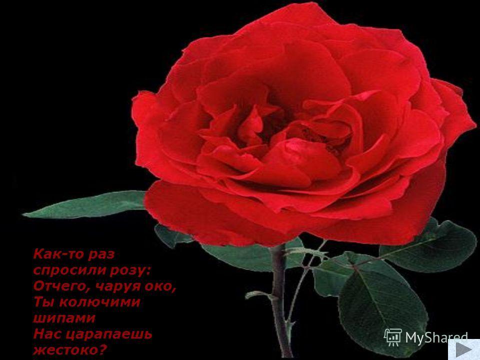 Как-то раз спросили розу: Отчего, чаруя око, Ты колючими шипами Нас царапаешь жестоко?