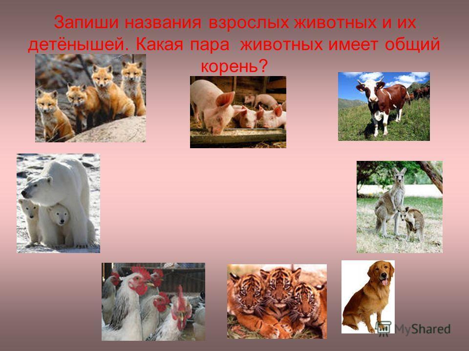 Запиши названия взрослых животных и их детёнышей. Какая пара животных имеет общий корень?