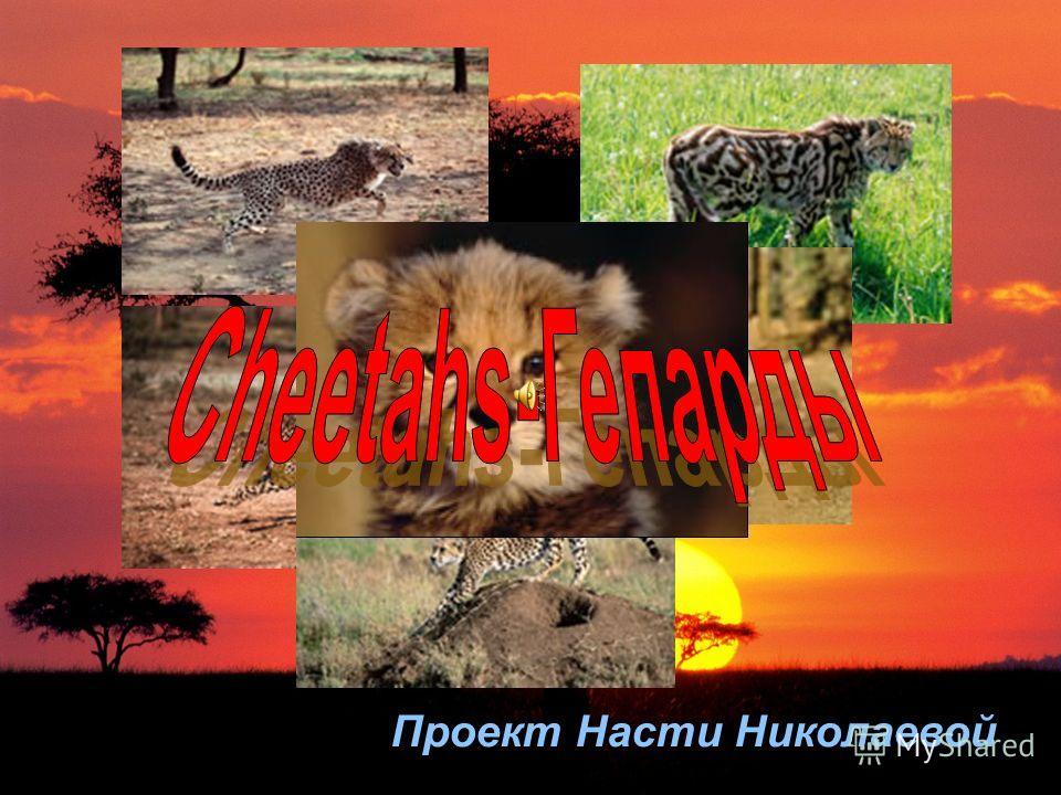 Проект Насти Николаевой