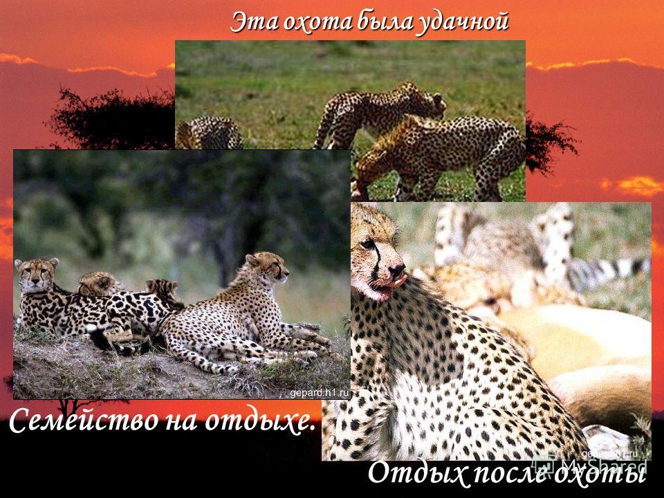 Эта охота была удачной Отдыхпосле Отдых после охоты Семейство на отдыхе.