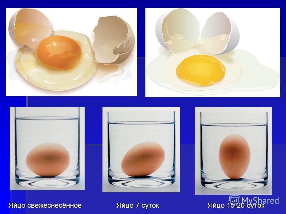 Яйцо 7 суток Яйцо 15-20 суток Яйцо свежеснесённое