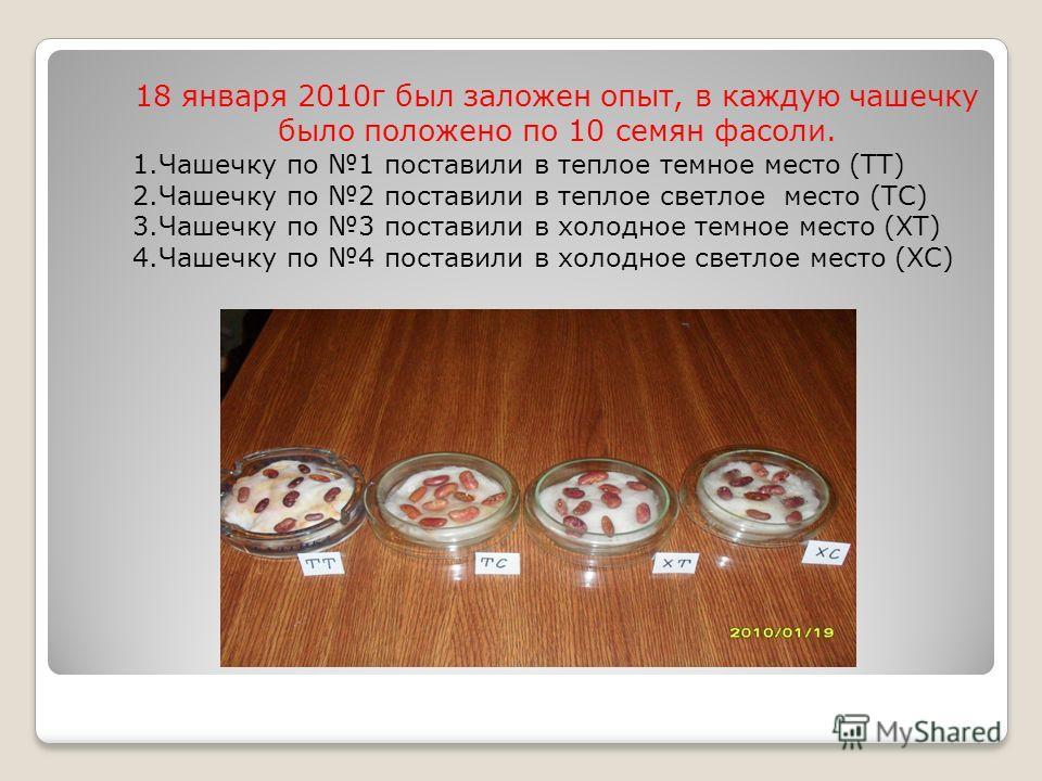 18 января 2010г был заложен опыт, в каждую чашечку было положено по 10 семян фасоли. 1.Чашечку по 1 поставили в теплое темное место (ТТ) 2.Чашечку по 2 поставили в теплое светлое место (ТС) 3.Чашечку по 3 поставили в холодное темное место (ХТ) 4.Чаше