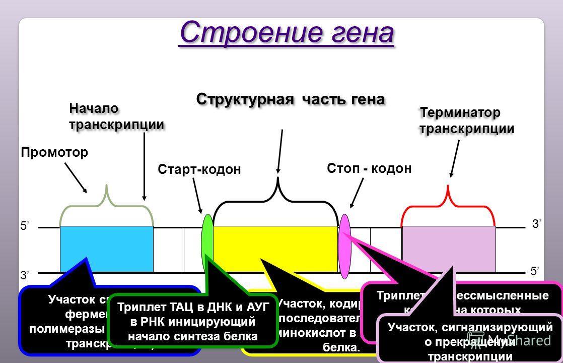 Строение бактерий  biofileru