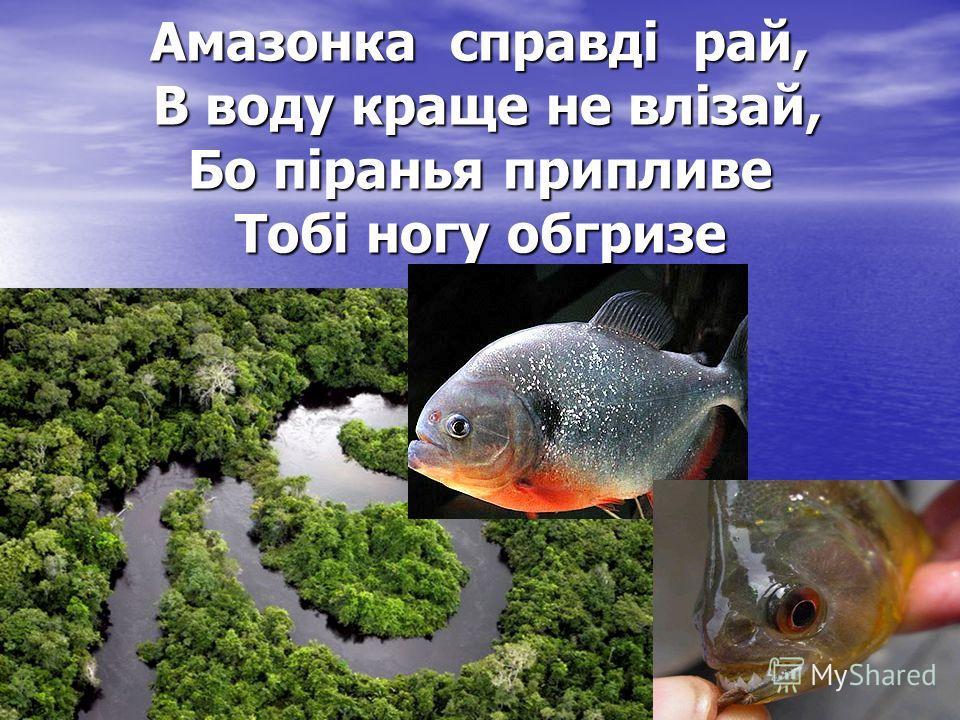 Амазонка справді рай, В воду краще не влізай, Бо піранья припливе Тобі ногу обгризе