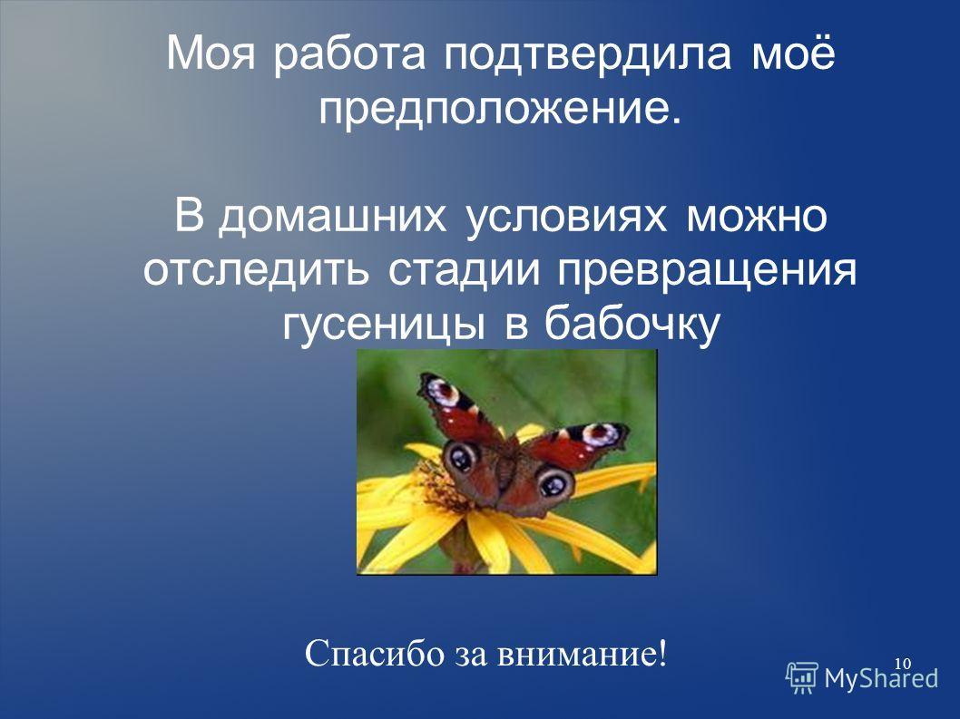 10 Моя работа подтвердила моё предположение. В домашних условиях можно отследить стадии превращения гусеницы в бабочку Спасибо за внимание!