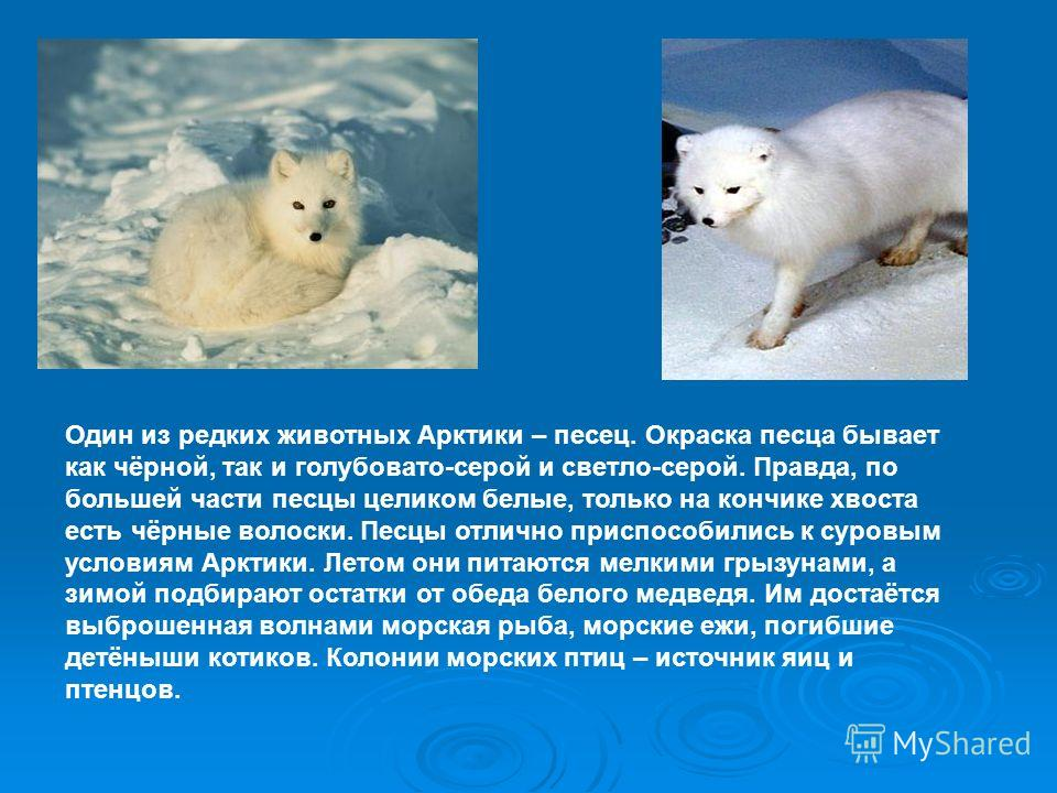 Арктический заповедник. Расположен на острове Врангеля, он был организован в 1976 году. На острове обитает самое крупное из копытных животных Арктики – овцебык, или мускусный бык, завезённый в заповедник из Америки. Это зверь в далёком прошлом обитал