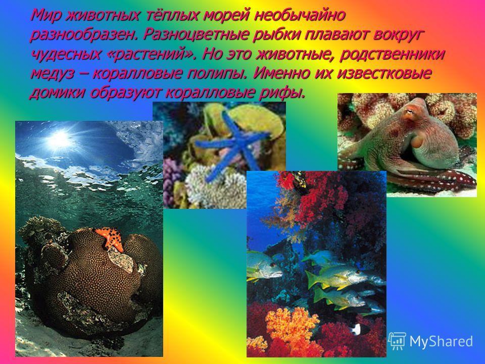 Мир животных тёплых морей необычайно разнообразен. Разноцветные рыбки плавают вокруг чудесных «растений». Но это животные, родственники медуз – коралловые полипы. Именно их известковые домики образуют коралловые рифы.
