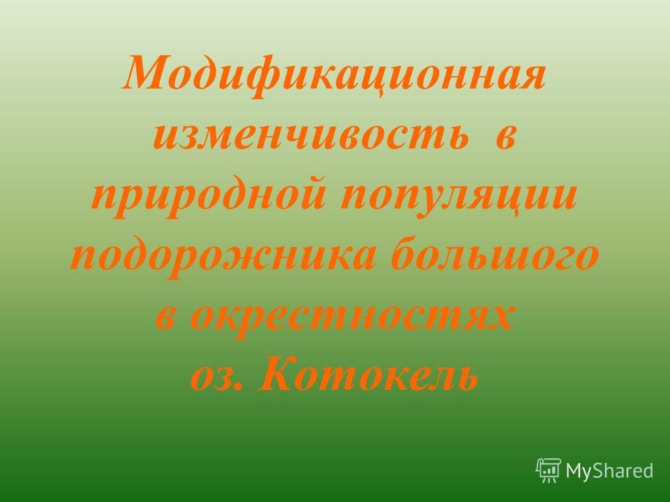 Модификационная изменчивость в природной популяции подорожника большого в окрестностях оз. Котокель