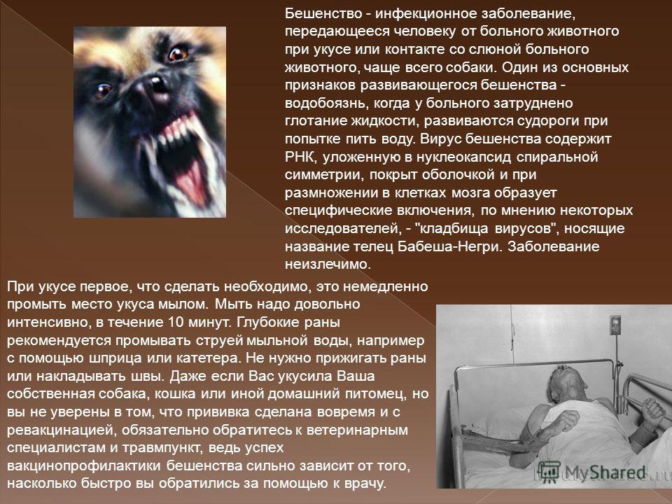 Бешенство - инфекционное заболевание, передающееся человеку от больного животного при укусе или контакте со слюной больного животного, чаще всего собаки. Один из основных признаков развивающегося бешенства - водобоязнь, когда у больного затруднено гл