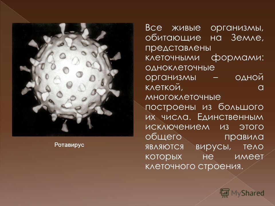 Все живые организмы, обитающие на Земле, представлены клеточными формами: одноклеточные организмы – одной клеткой, а многоклеточные построены из большого их числа. Единственным исключением из этого общего правила являются вирусы, тело которых не имее