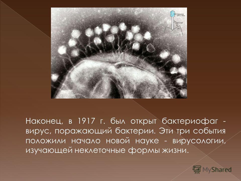 Наконец, в 1917 г. был открыт бактериофаг - вирус, поражающий бактерии. Эти три события положили начало новой науке - вирусологии, изучающей неклеточные формы жизни.