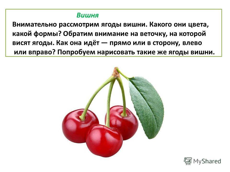 Вишня Внимательно рассмотрим ягоды вишни. Какого они цвета, какой формы? Обратим внимание на веточку, на которой висят ягоды. Как она идёт прямо или в сторону, влево или вправо? Попробуем нарисовать такие же ягоды вишни.