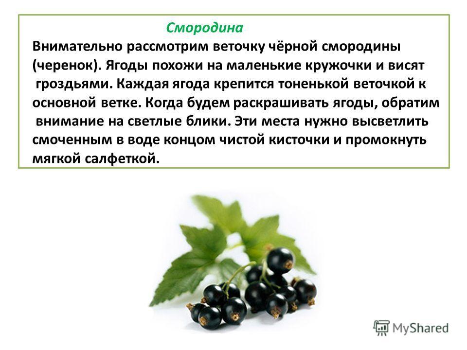 Смородина Внимательно рассмотрим веточку чёрной смородины (черенок). Ягоды похожи на маленькие кружочки и висят гроздьями. Каждая ягода крепится тоненькой веточкой к основной ветке. Когда будем раскрашивать ягоды, обратим внимание на светлые блики.