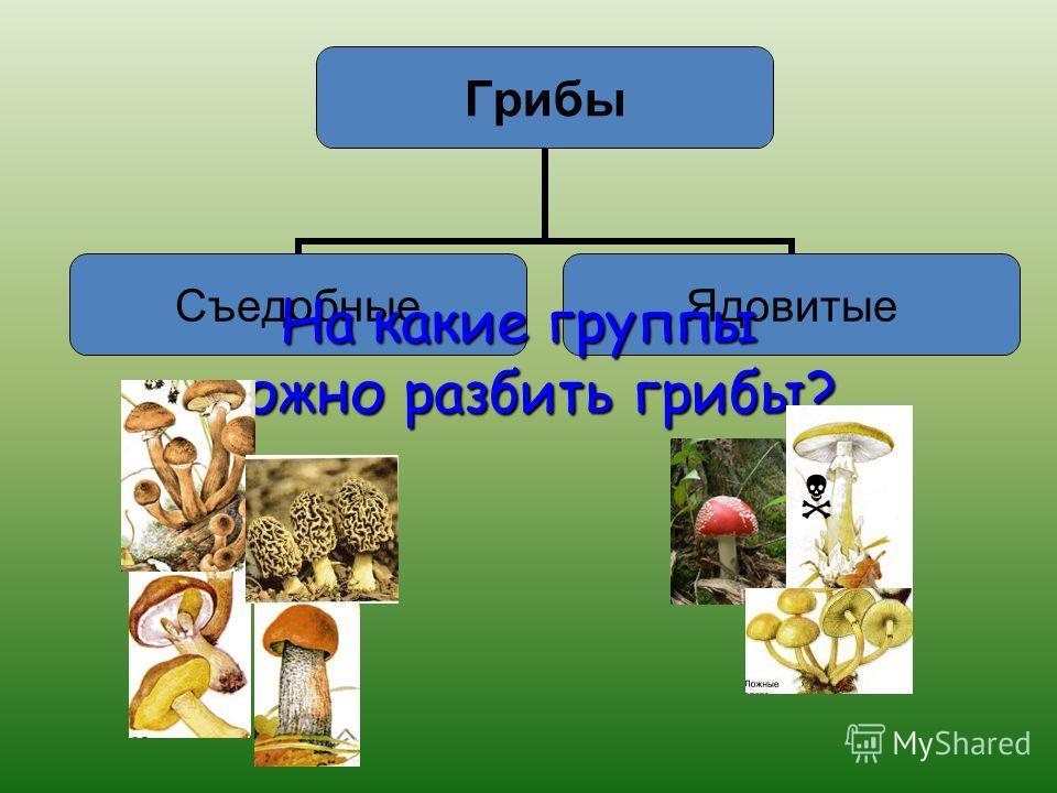 КАК ПОНИМАЕШЬ ПОСЛОВИЦУ: «Всякий гриб в руки берут, Да не всякий в кузовок кладут