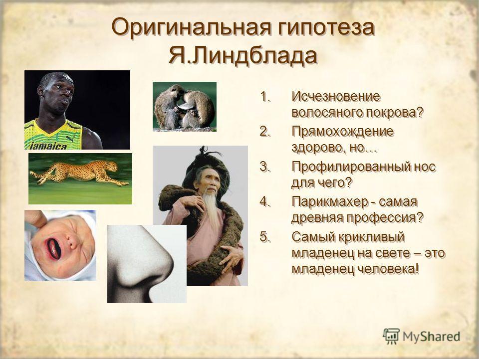 Оригинальная гипотеза Я.Линдблада 1.Исчезновение волосяного покрова? 2.Прямохождение здорово, но… 3.Профилированный нос для чего? 4.Парикмахер - самая древняя профессия? 5.Самый крикливый младенец на свете – это младенец человека!
