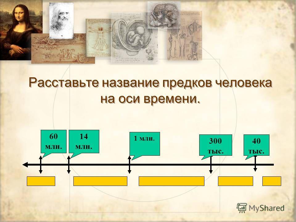 Расставьте название предков человека на оси времени. 60 млн. 14 млн. 1 млн. 300 тыс. 40 тыс.