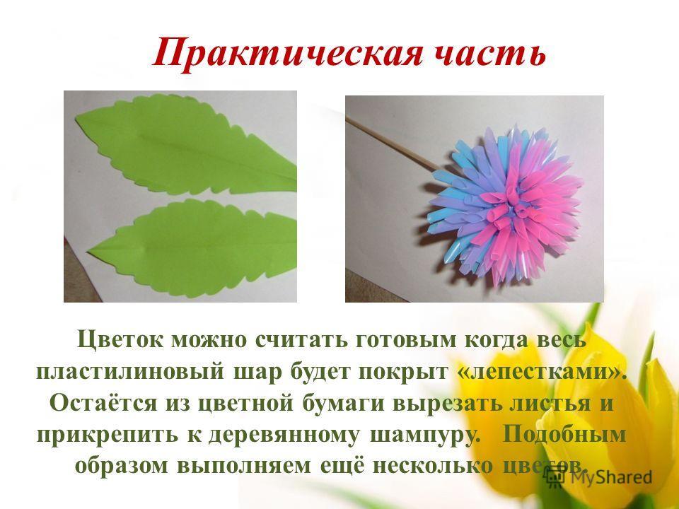 Цветок можно считать готовым когда весь пластилиновый шар будет покрыт «лепестками». Остаётся из цветной бумаги вырезать листья и прикрепить к деревянному шампуру. Подобным образом выполняем ещё несколько цветов. Практическая часть