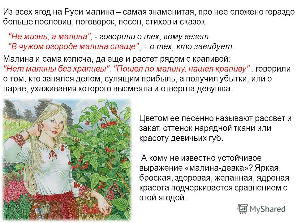Из всех ягод на Руси малина – самая знаменитая, про нее сложено гораздо больше пословиц, поговорок, песен, стихов и сказок.